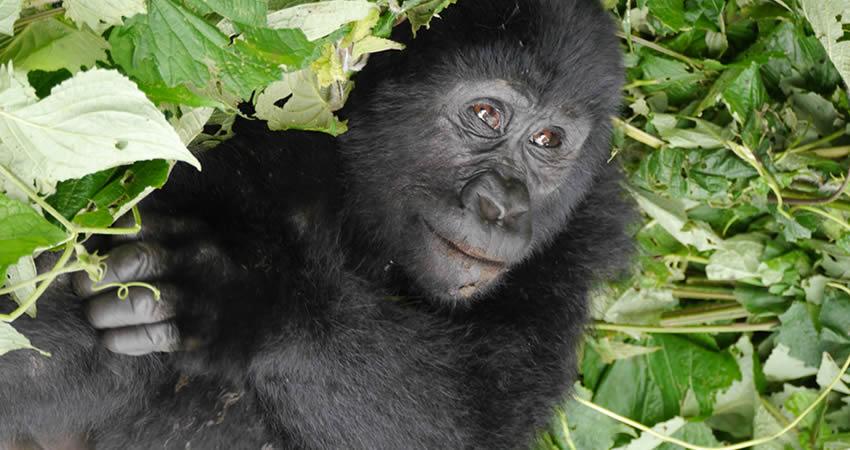6 Days Gorillas and Wildlife Rwanda