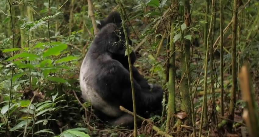 6 Days Gorillas and Wildlife Uganda Safari