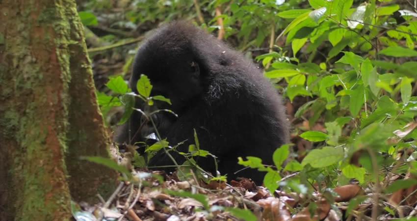 5 Days Gorilla Trekking and Wildlife Tour
