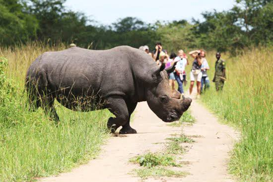 All You Need To Know About Ziwa Rhino Sanctuary